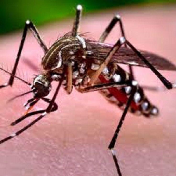 #Serviço de Zoonoses alerta população sobre cuidados com a Dengue - Jornal da Economia: Alagoas 24 Horas Serviço de Zoonoses alerta…