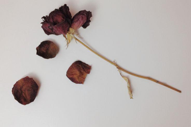 Dried roses, keepsakes. #DIY #roses #keepsakes #memories