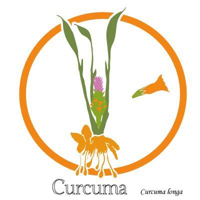Curcumine - soulager les douleurs articulaires - uptimoi