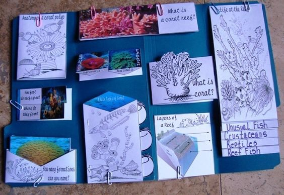 Free Lapbook on Coral Reefs. Coral reefs swarm with brilliant colored fish, starfish, giant clams and sea slugs. They are not only beautiful to look at; but they are home to thousands of other species. Coral reefs can be large or small and are some of the oldest ecosystems on the planet. Grab the free lapbook @ Tina's Dynamic Homeschool Plus