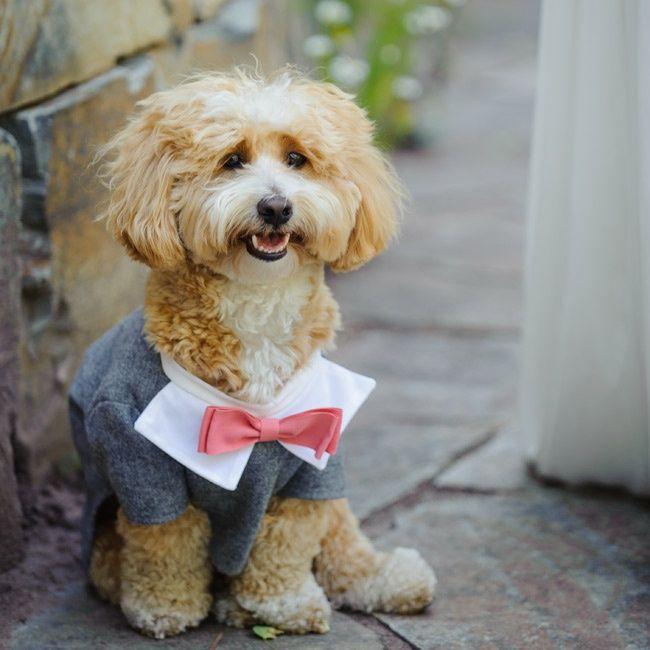Un mono traje para perros, detalles para las bodas