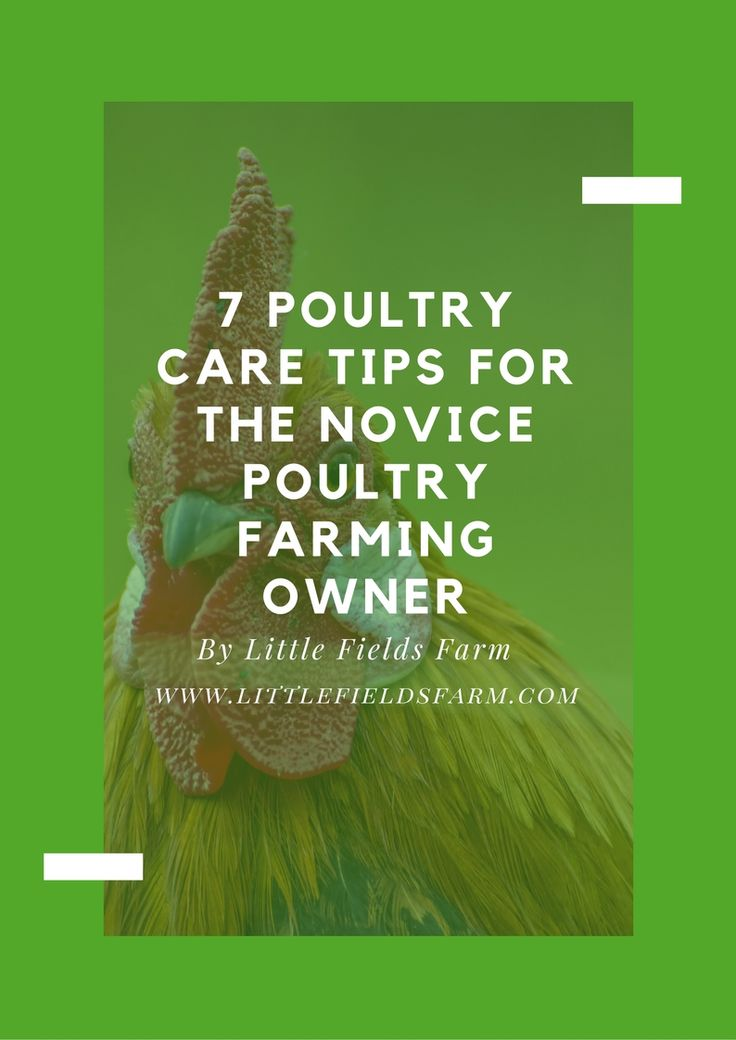 7 Poultry Care Tips for the Novice Poultry Farming Owner @GoogleDrive