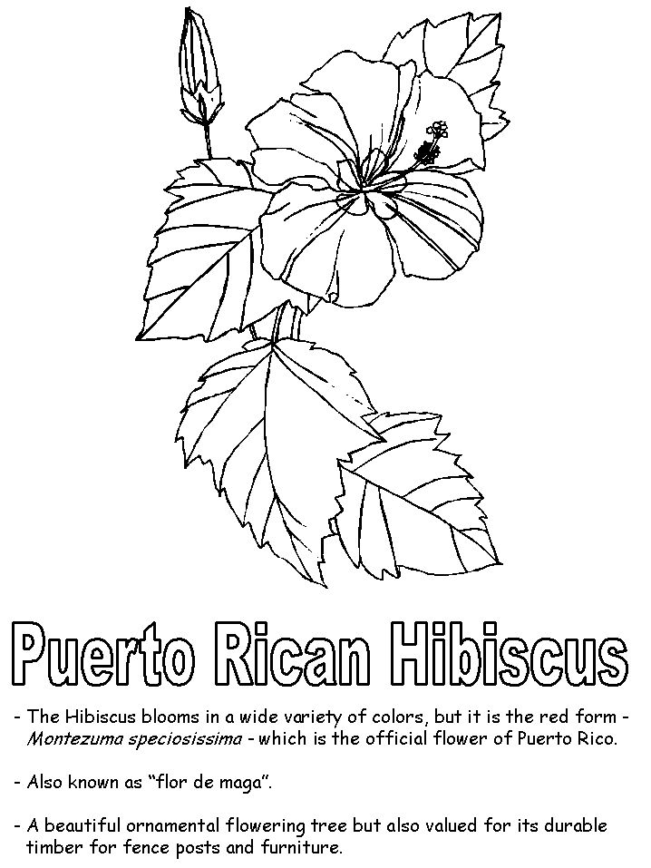 Top 10 Hibiscus Coloring Pages For Toddlers