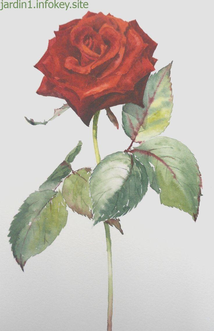 Epingle Par Maria Tirelli Sur Peinture Tabeaux Comment Peindre
