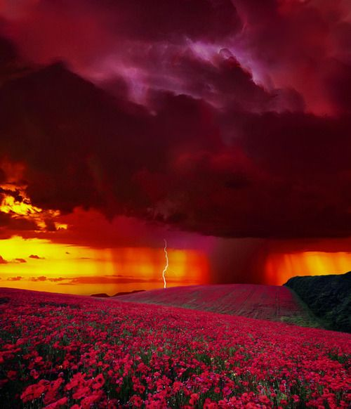 Love the red sky, and poppies in the field.