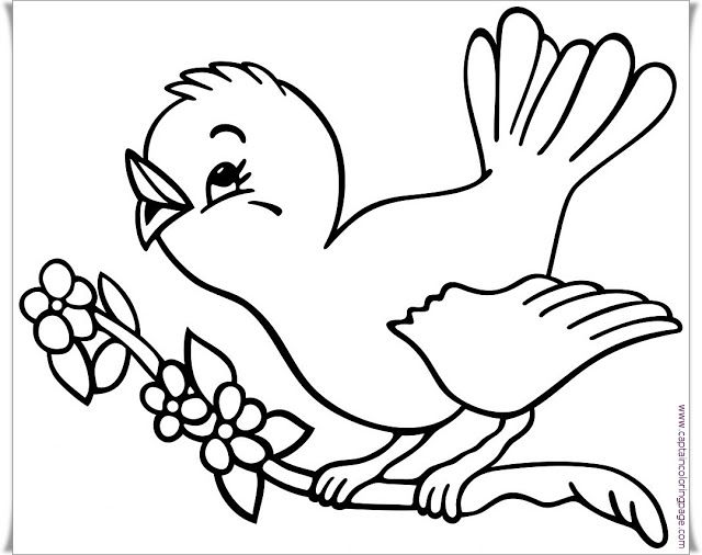Bird Coloring Page Printable Coloring Page Bird Coloring Pages Coloring Pages Animal Coloring Pages