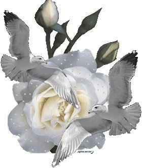 images of animated white roses - photo #3
