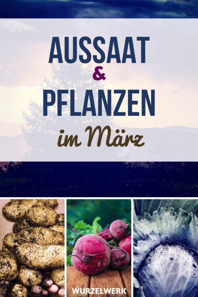 Aussaat & Pflanzen im März + Beispiel-Pflanzplan – Wurzelwerk: Gemüsegarten-Tipps!