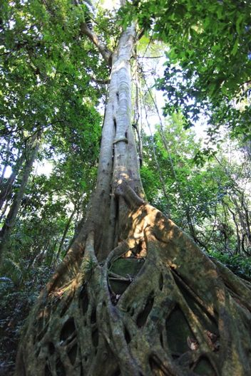 Walking NSW Crown Reserves    Many Crown reserves incorporate walking tracks, including: