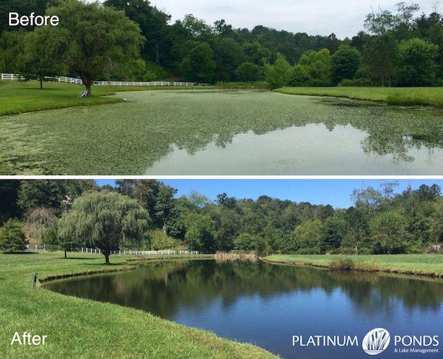 152 best blog for platinum ponds and lake management for Fish pond management