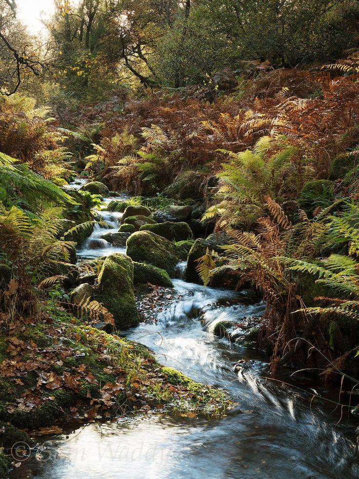 Venford Brook, Dartmoor, Devon, England.