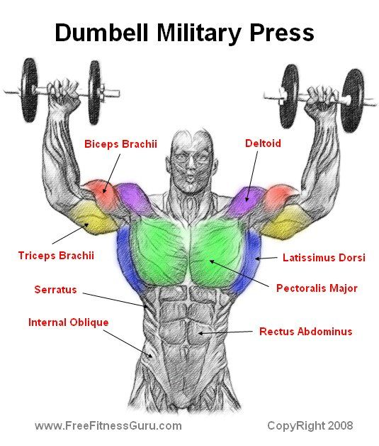 The Overhead Press The Actual Difference Between Seated: Dumbell Military Press