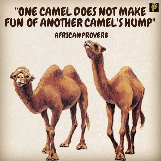 "Humour is a great thing. But to make fun of everything of everything is not funny at all! A good humorist knows that there is limit as to what things to joke about. To camels, their hump is too ""heavy"" an issue to make light of. Needless to say, every grown camel has a hump. Some have one, others have two and they come in different sizes and shapes. In the same way, every human has an imperfection. They say ""opinions are like noses, everybody has one"" but I like to put it this way…"