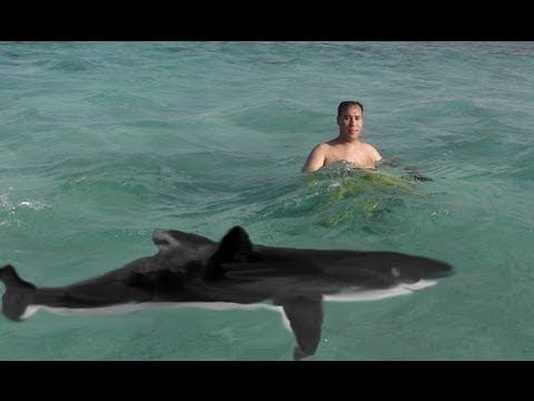 Real Stories of Shark Attacks