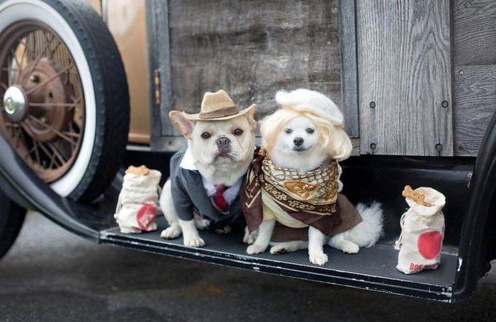 ¡A un lado, humanos! Estas fotos de un compromiso canino es lo que el mundo realmente necesita ver