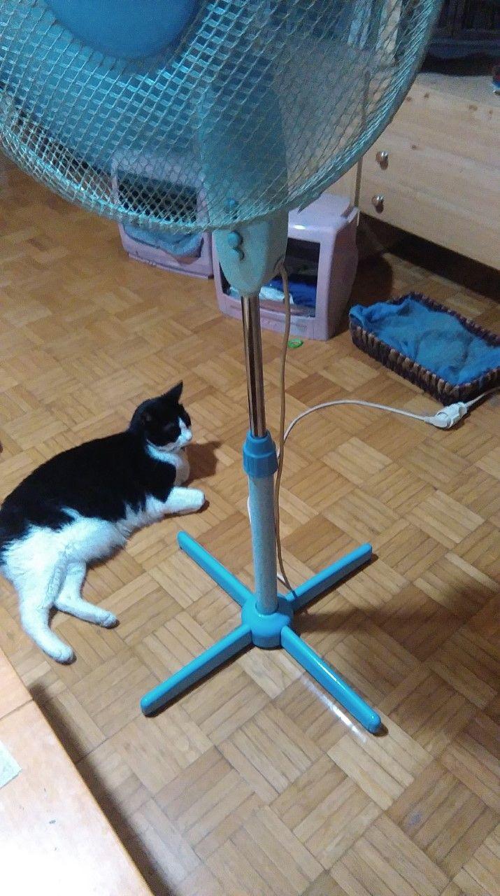 ah the fan!! mikroulis