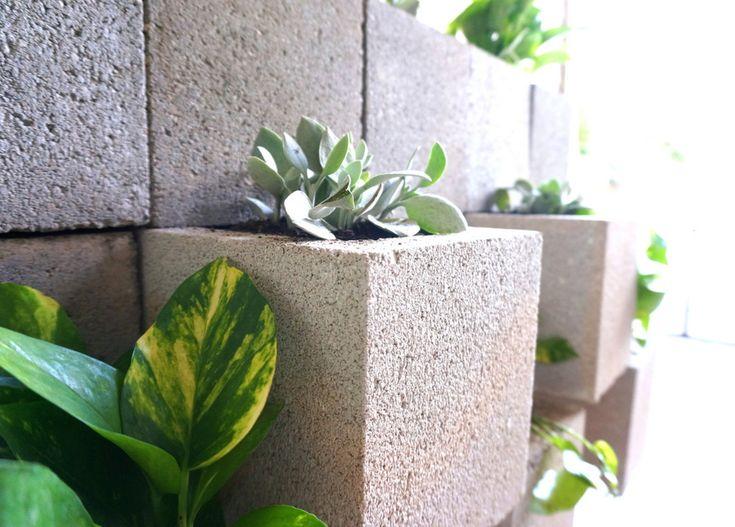 1000 Ideas About Golden Pothos On Pinterest Plants