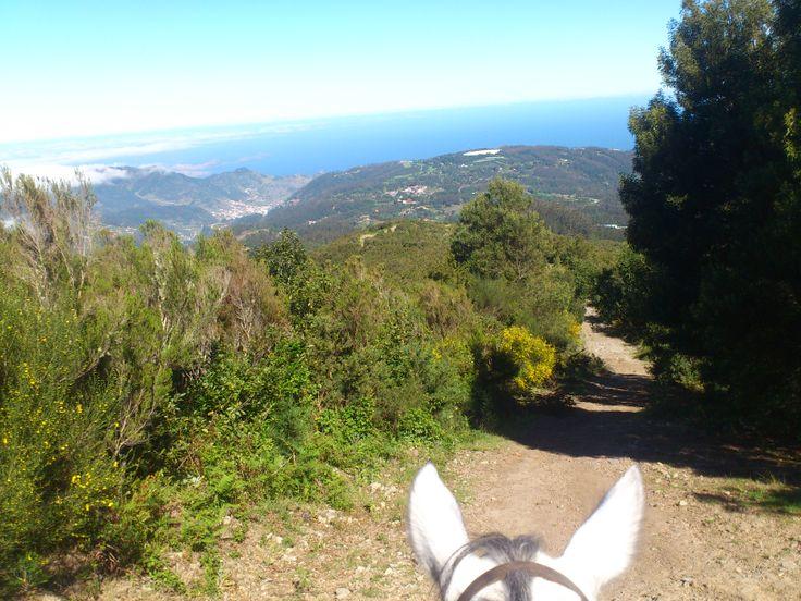 What a magical place!   #horses #chevaux #cheval #pferd #paard #paardrijden #horseriding #equitation #reiten #madeiraisland #laurissilva #fun #thingstodo #leisureriding #sun #pontadesaolourenco #santodaserra