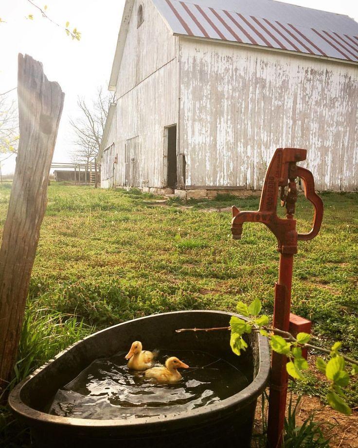 Old'FarmHouse For now, I am Spring  — Family Farm  @bryartonfarm