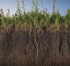 Как повысить плодородие почвы в огороде
