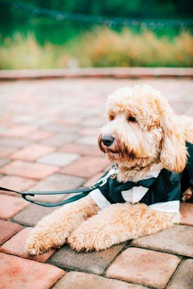 Die süßesten Ringträger  #Kinder und #Hunde auf Hochzeiten bringen unser Herz zum Schmelzen: hier die süßesten Inspirationen für deinen großen Tag. #hochzeit