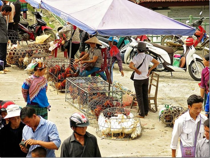 Poultry for sale at Bac Ha market, Vietnam