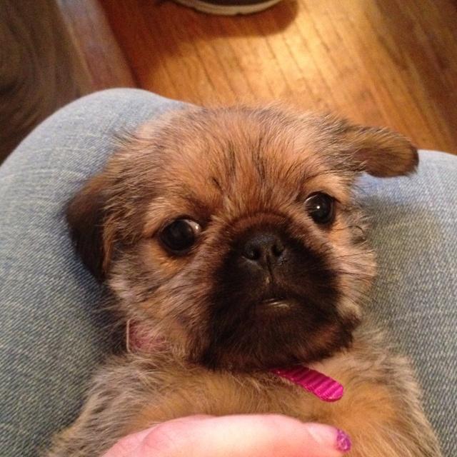 My Pug-Zu! Love her!