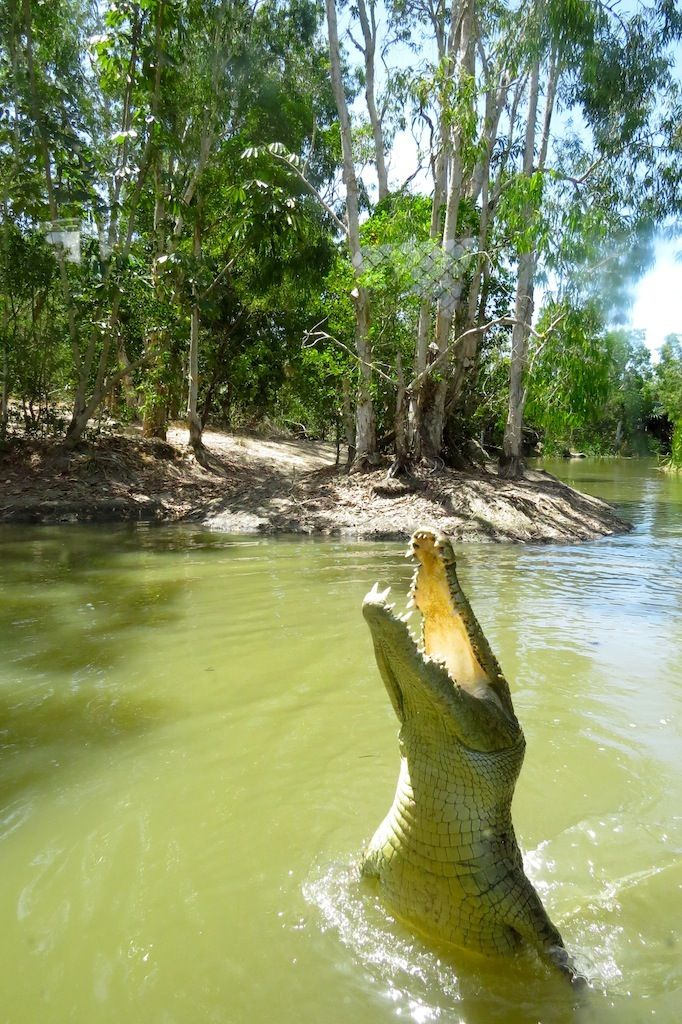 Hartley's Crocodile Adventure - a great place to see and learn about crocodiles in tropical north Queensland