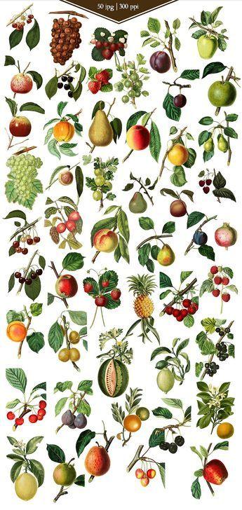 Vintage Fruit Vector Graphics - https://www.designcuts.com/product/vintage-fruit-vector-graphics/