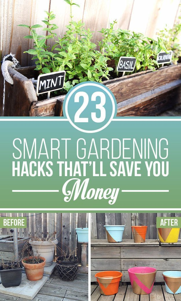 23 Cheap And Easy Tricks Every Gardener Should Know http://www.buzzfeed.com/erinfrye/plant-that-cash-back-in-your-wallet?utm_content=buffer1d4dc&utm_medium=social&utm_source=pinterest.com&utm_campaign=buffer#.skz5MEGKQ&_a5y_p=3676749