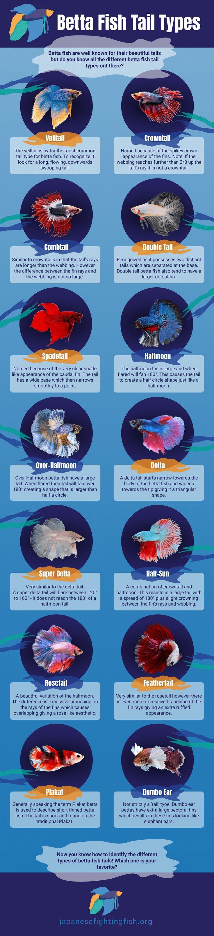 196 best Aquarium images on Pinterest