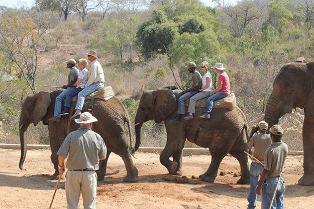 Did you know that you can book an elephant-back South African safari tour right here with us at Elephant Herd for your next tour? So if your bucket list includes riding one of these magnificent animals, contact us now and we'll make it happen!