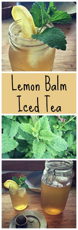 How to make a wonderful iced green tea with Lemon Balm~ Plus tips for growing and foraging for lemon balm! www.growforagecoo...