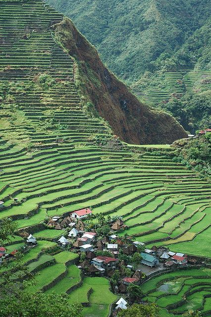 Batad Rice Terraces, Banaue, Philippines  Flew over these a few times, what a beautiful sight!