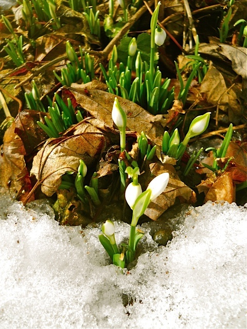 flower in the snow by Kathy Mereand, via Flickr