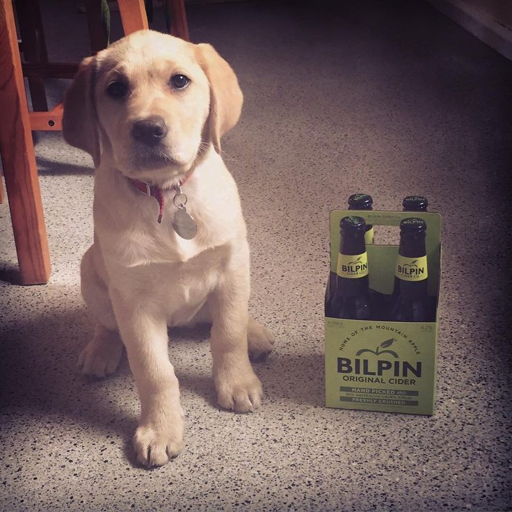 Both puppy and cider from Bilpin