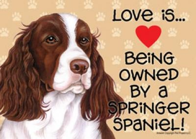 Springer Spaniels . . .such loveable and devoted companions.