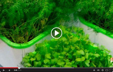 Здоровья КЛАД - Гидропонный проращиватель зерен, семян и орехов