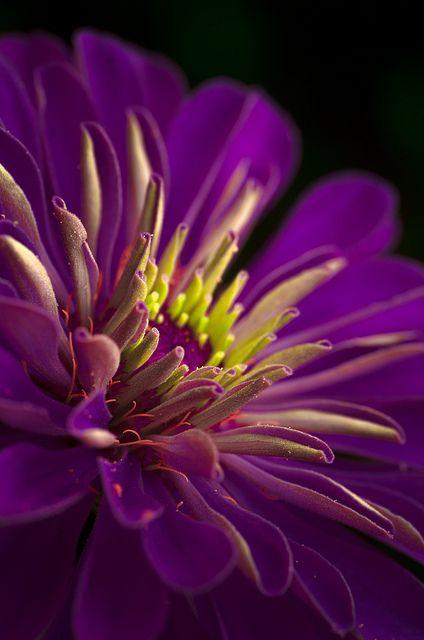 ~~Morning Colors ~ deep purple flower detail by aravis121 ...
