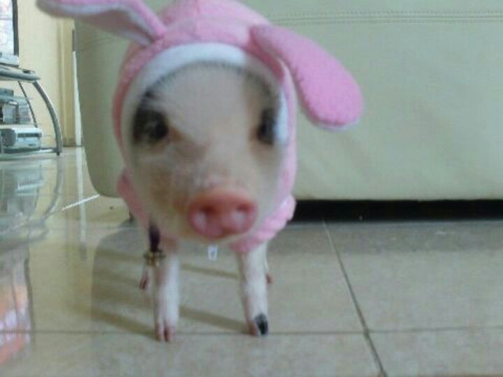 Easter Piggy is coming to town