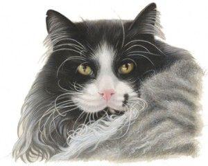Poes Kat Zwart Wit Haar --ARTIST FRANCIEN VAN WESTERING / DUTCH = Cat Black White Hair