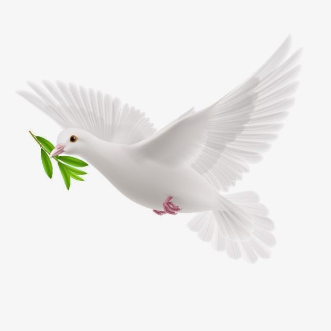 Dove clipart olive branch - Pencil and in color dove ... | Dove tattoos,  Dove drawing, Peace dove tattoos
