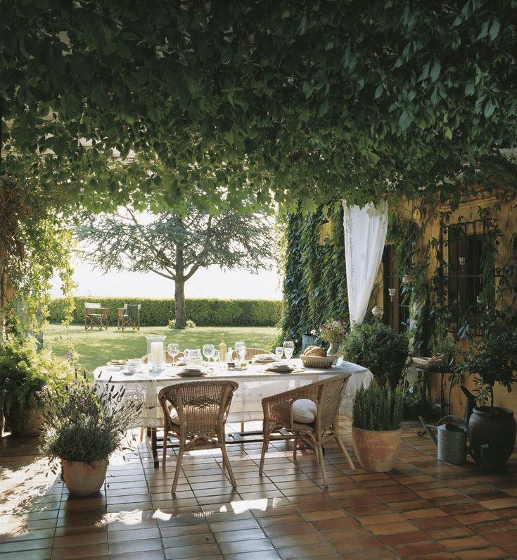 Обеденный стол на террасе под виноградником. .