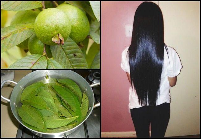 Los beneficios de la guayaba para aumentar y hacer crecer el cabello