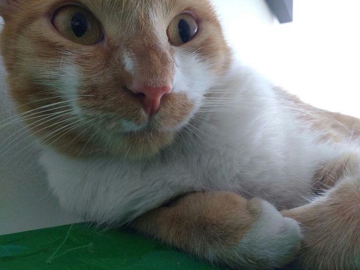 Mi gata Karen se despierta al sentir que le tomaré una foto