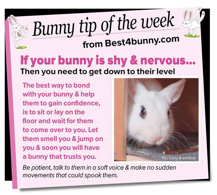 Bunny tip of the week - If you have a shy & nervous, follow this tip