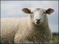 Grundlehrgang Schafhaltung I - Haus Düsse, Landwirtschaftskammer NRW