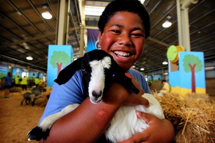 Baby goat at the Sydney Royal Easter Show