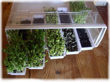 Germoir Easygreen, LA référence des germoirs pour faire germer toutes vos graines