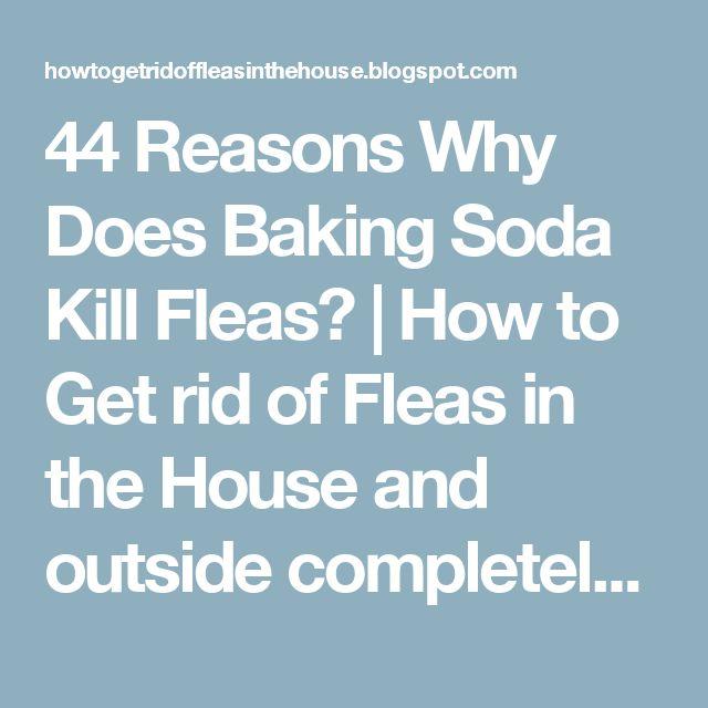 The 25 Best Killing Fleas Ideas On Pinterest Home
